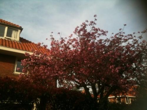 Дома в основном здесь двухэтажные, деревья выше крыш