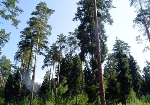 Спустя два года из 500 га прирезанных к деревням лесов 20 га уже оказались приватизированы Фото: Е. Разумный / Для Ведомостей