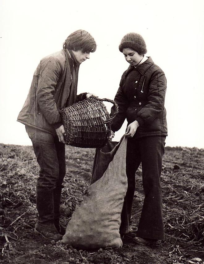 Поездка на картошку в десятом классе (1977)
