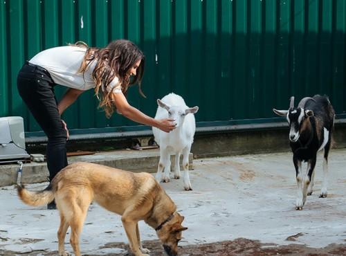 У «Лесного приюта» есть свое небольшое хозяйство — козы, маленькая пекарня и пасека, медом с которой угощают посетителей