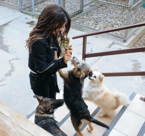 В приюте самые разные животные — взрослые и маленькие, рожденные на улице и даже породистые «отказники»