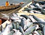 Особенности рыбного лоббизма