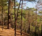 Лес преткновения